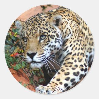 Macro de acecho del leopardo pegatina redonda