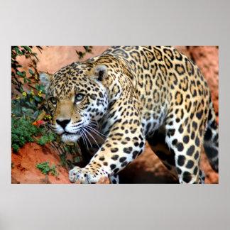 Macro de acecho del leopardo póster