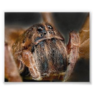 Macro de la araña arte fotográfico