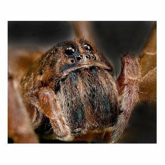 Macro de la araña esculturas fotográficas