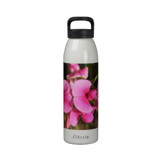 macro de la flor del guisante de olor botella de beber