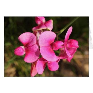 macro de la flor del guisante de olor tarjeta pequeña
