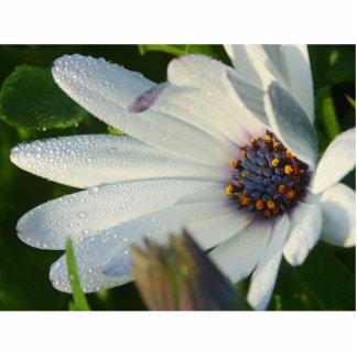 Macro de la flor del parque del balboa esculturas fotograficas