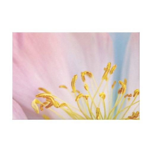 Macro de la flor del Peony Lona Estirada Galerías