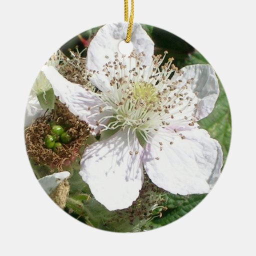 Macro de la floración de la fresa salvaje adorno para reyes