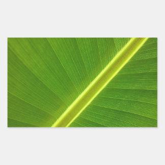 Macro de la hoja del plátano pegatina rectangular