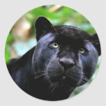 Macro de la pantera negra etiqueta redonda
