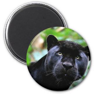 Macro de la pantera negra imán redondo 5 cm