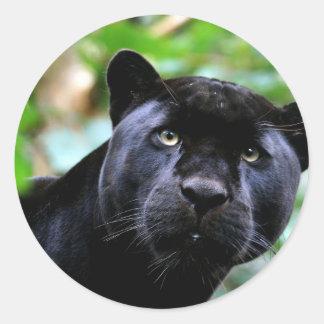 Macro de la pantera negra etiqueta