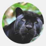 Macro de la pantera negra pegatina redonda