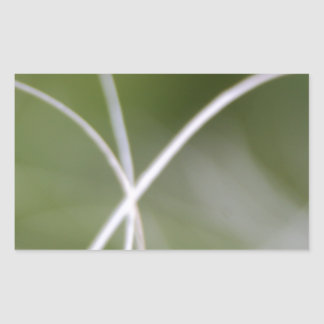 Macro de una hoja verde de la palmera pegatina rectangular
