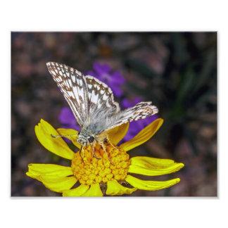 Macro de una mariposa del capitán en una flor amar fotografias