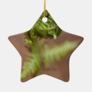 Macro del Fiddlehead Ornamento Para Arbol De Navidad
