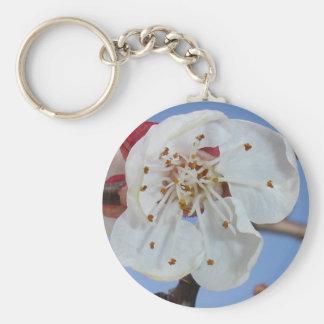 Macro del flor del albaricoque llavero redondo tipo pin
