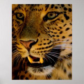 Macro del gato grande póster
