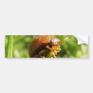 Macro del insecto del Gorse Pegatina Para Auto