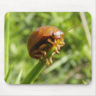 Macro del insecto del Gorse Tapetes De Raton