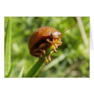 Macro del insecto del Gorse Tarjeta De Felicitación
