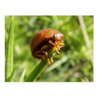 Macro del insecto del Gorse Tarjetas Postales