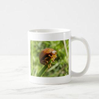 Macro del insecto del Gorse Taza De Café