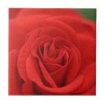 Macro del rosa rojo azulejo