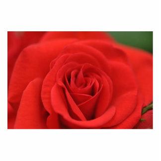 Macro del rosa rojo escultura fotografica