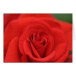 Macro del rosa rojo tarjeton