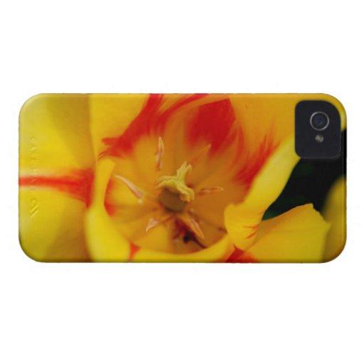 macro del tulipán Case-Mate iPhone 4 coberturas
