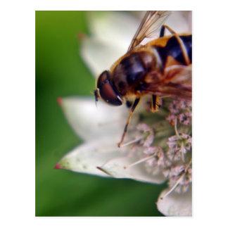 Macro Drone Flower Original Postcard