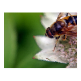 Macro Drone Flower - version 2 Postcard