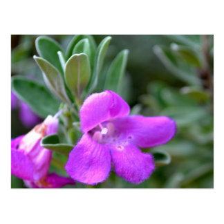 Macro False Foxglove Flower Postcard