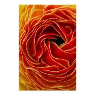 Macro flower abstract at Flower Fields Poster