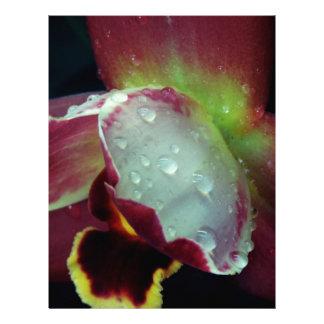 Macro Flower Customized Letterhead