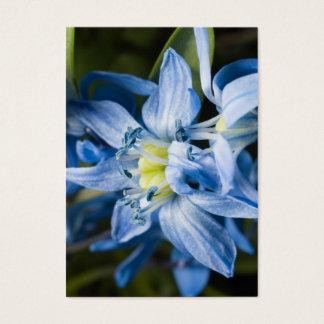 Macro fo blue snowdrop flower business card