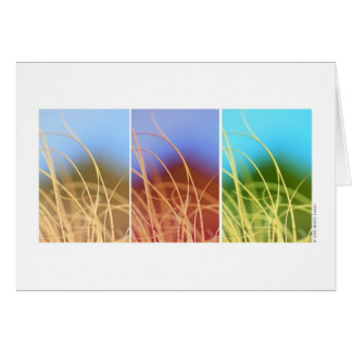 Macro Grass Trio Card