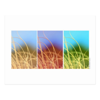 Macro Grass Trio Postcard