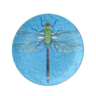 Macro Green Dragonfly on Blue Background Dinner Plate