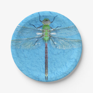 Macro Green Dragonfly on Blue Background Paper Plate