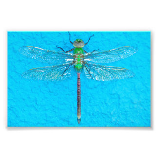 Macro Green Dragonfly on Blue Background Photo Print