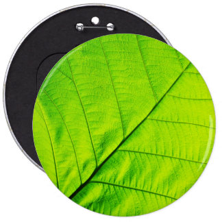 Macro Green Leaf Button