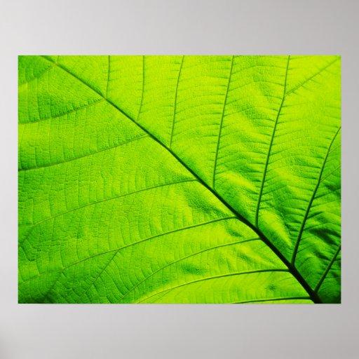 Macro Green Leaf Poster