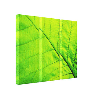 Macro Green Leaf Wrapped Canvas