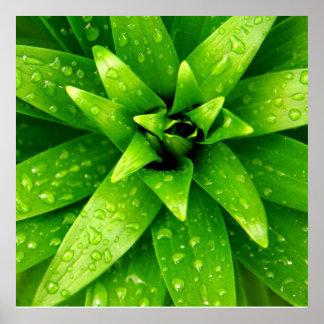 macro green poster