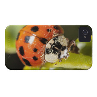 Macro; Horizontal; Colour; Color; Nobody 2 Case-Mate iPhone 4 Case