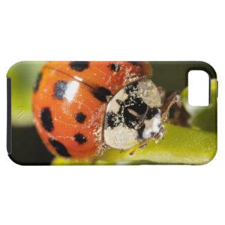 Macro; Horizontal; Colour; Color; Nobody 2 iPhone SE/5/5s Case