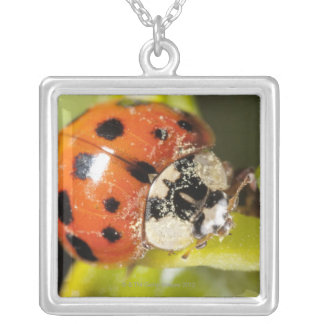 Macro; Horizontal; Colour; Color; Nobody 2 Silver Plated Necklace