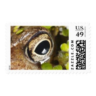 Macro; Horizontal; Colour; Color; Nobody Postage Stamp