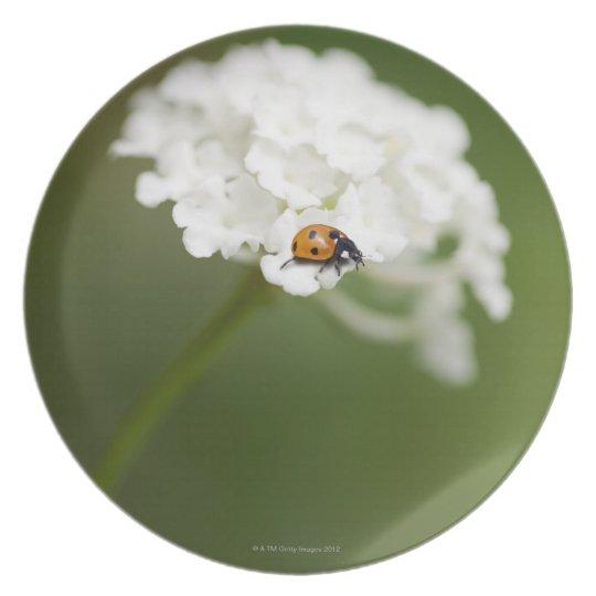 Macro image of a Ladybird on a wild flower Melamine Plate