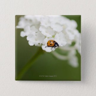 Macro image of a Ladybird on a wild flower Pinback Button