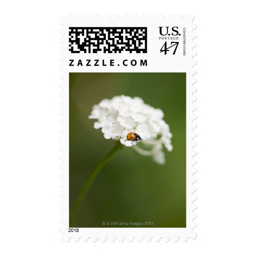 Macro image of a Ladybird on a wild flower Stamp
